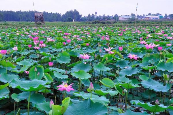 Dong Thap, Mekong Delta, Ben Tre