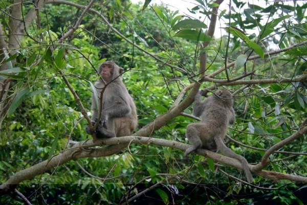 Ben En National Park, Thanh Hoa, Thanh Hoa Province