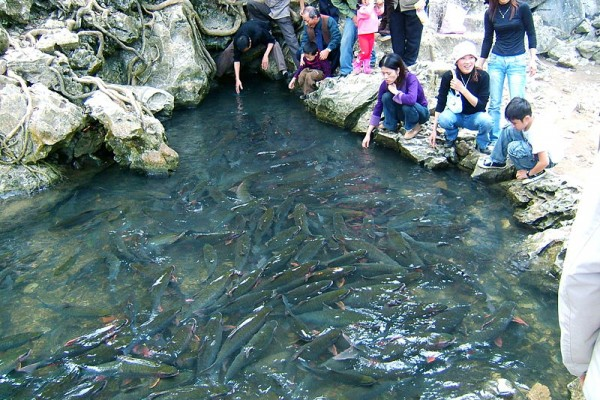 Cam Luong Fish Spring, Thanh Hoa, Thanh Hoa City
