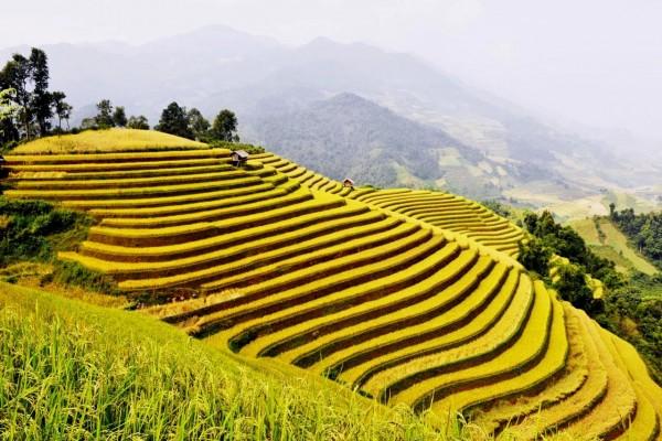 Hoang Su Phi, Ha Giang, Ha Giang Travel