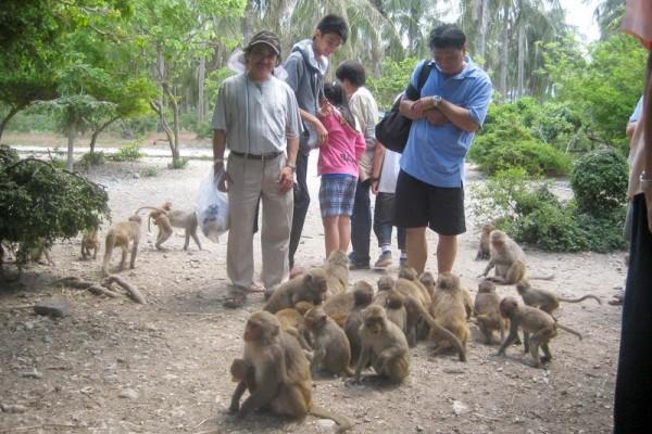 Monkey Island, Cat Ba Island