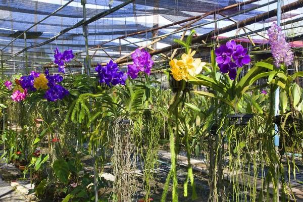 Orchid Garden, Phuket, Thailand