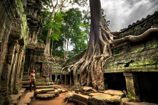 Ta ProhmTemple, Siem Reap