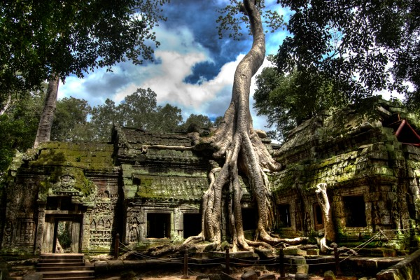 Ta Prohm Temple, SIem Reap, Siem Reap Tour