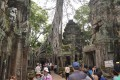 Ta Prohm Temple, Ta Prohm Temple Travel guide, Siem Reap
