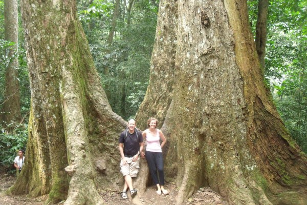Thousand Year Old Tree in Cu Phuong National Park, Cuc Phuong National Park in Ninh Binn