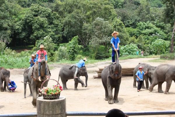 Elephant Ride, Mae Tang, Mae Tang in Thailand