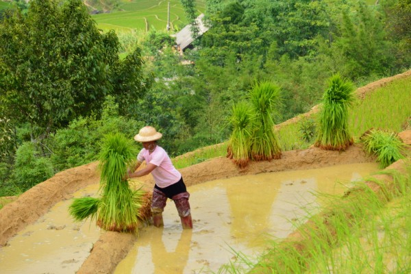 Lao Chai Village, Sapa, Sapa Hotel, Sapa Tour, holiday packages to suit your budget and choice of destinations