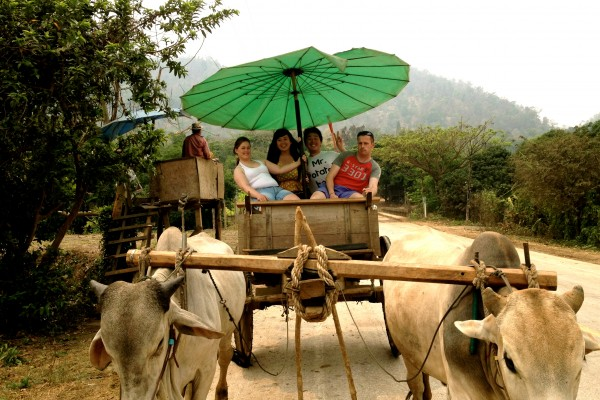 Ox cart ride Tour, Mae Tang, Thailand
