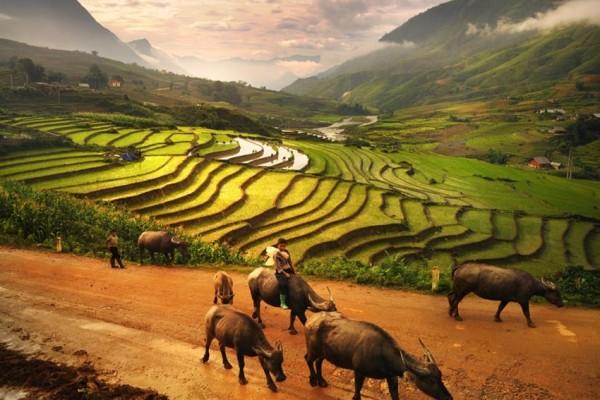Sin Chai Village, Sapa, Cat Cat, Sin Chai, Ham Rong Mountain, Fansipan