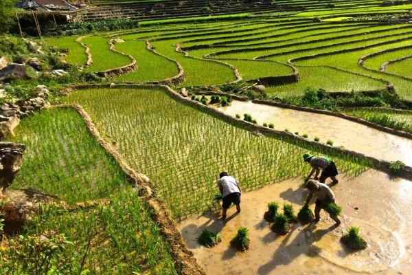Y Linh Ho Village, Y Linh Ho Village in Sapa,