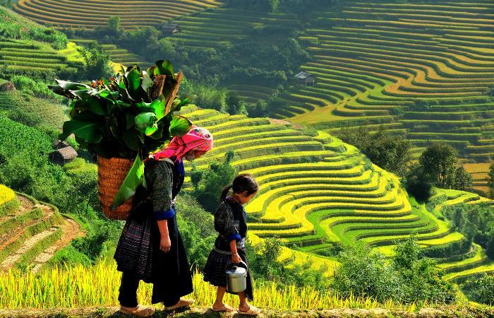 Sapa Vietnam Weather