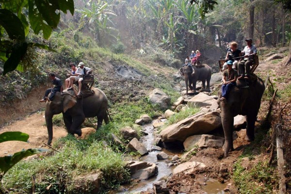 Chiang Mai Elephant Safari, tour chiang mai, elephant tour in chiang mai, elephant tour in thailand