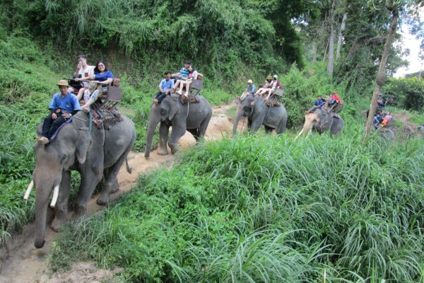Elephant Ride, tour, trip, holiday, vacation