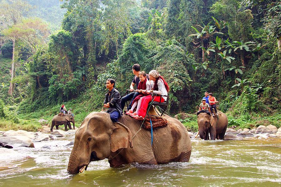 Elephant Friendly Tours Thailand