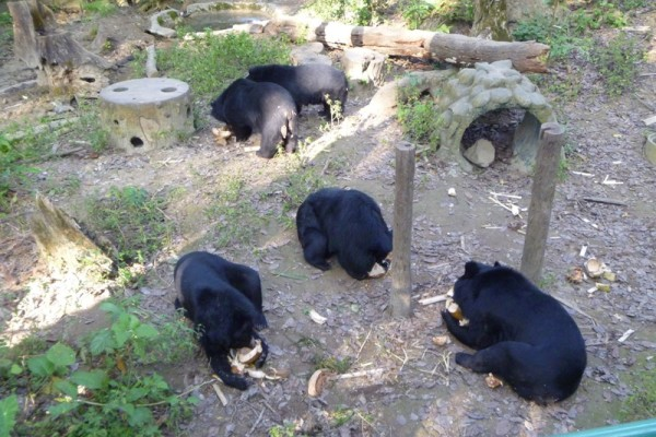 Bear Sanctuary,Luang Prabang, laos