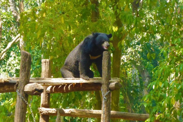 Bear Sanctuary, Luang Prabang, Laos