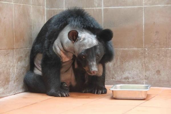 Bear Sanctuary, Luang Prabang, Laos