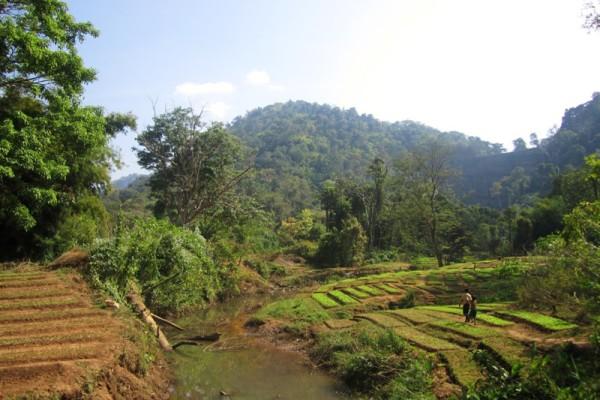 Bolevan Plateau, Paske, Laos