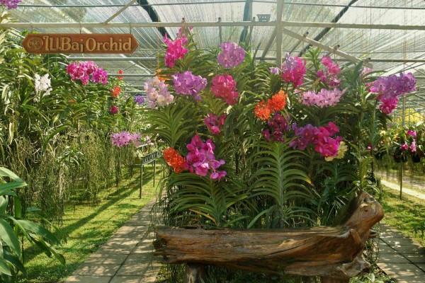 Butterfly Farm, Chiang Mai, Thailand