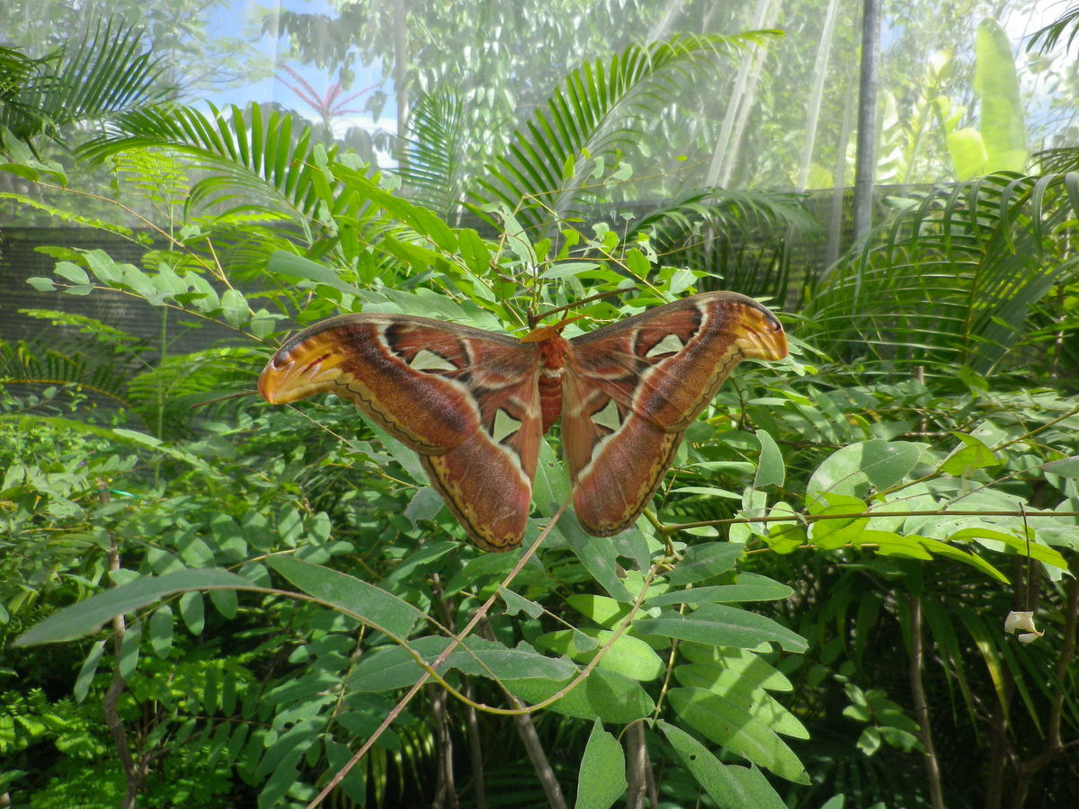 Butterfly Farm Travel Guide Tour Chiang Mai
