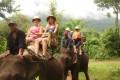 elephant riding in laos, laos tour