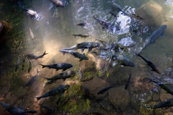 Fish Cave, Pai, Mae Hong Son, Thailand