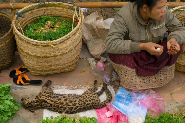 Luang Prabang Morning Market, Laos, Travel Guide
