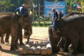 Lampang Elephant Conservation Center, Lampang, Thailand