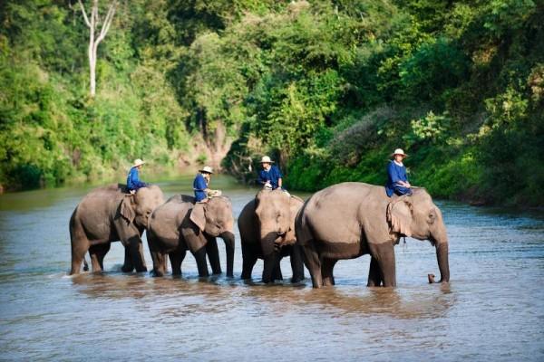Lampang Elephant Conservation Center, Lampang, Thailand