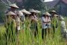 Living Land Farm, Luang Prabang, Laos