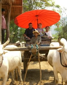 Ox cart ride 1