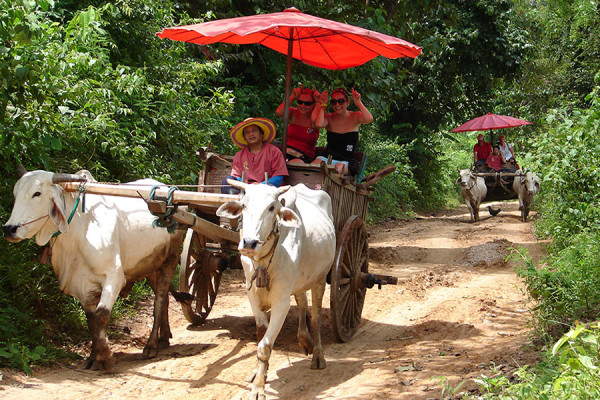 Ox cart ride, Chiang Mai, Thailand