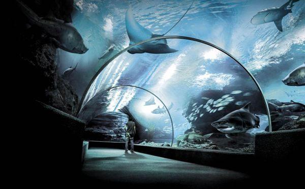 Siam Ocean World, Bangkok, Thailand