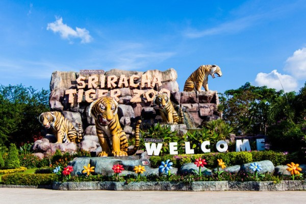 Sriracha Tiger Zoo , Pattaya, Thailand